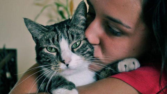 Чем можно заразиться от кошки: болезни, передающиеся от кошек