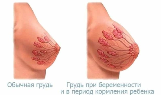 На каком сроке при беременности появляется первое молозиво, цвет и причины появления