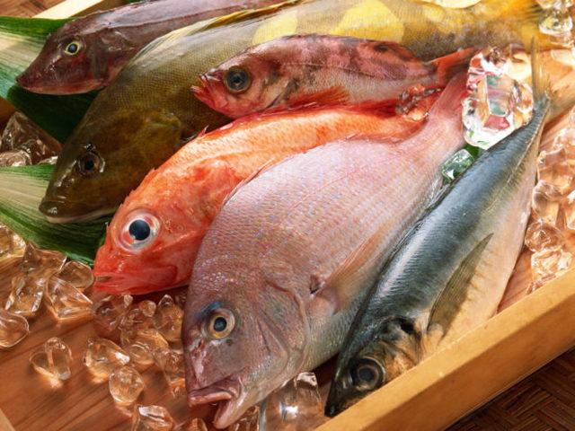 С какой рыбы начинать прикорм, как приготовить рыбу для прикорма, как вводить рыбу
