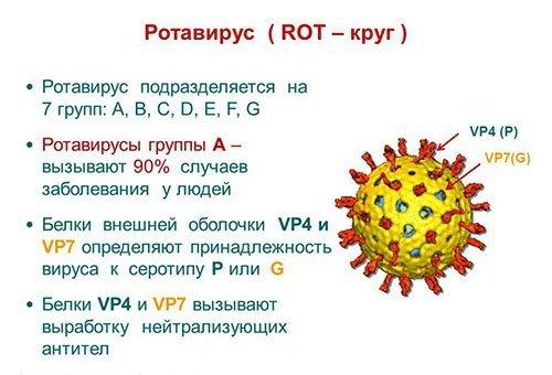 Может ротавирус передаться от ребенка родителям за один день?