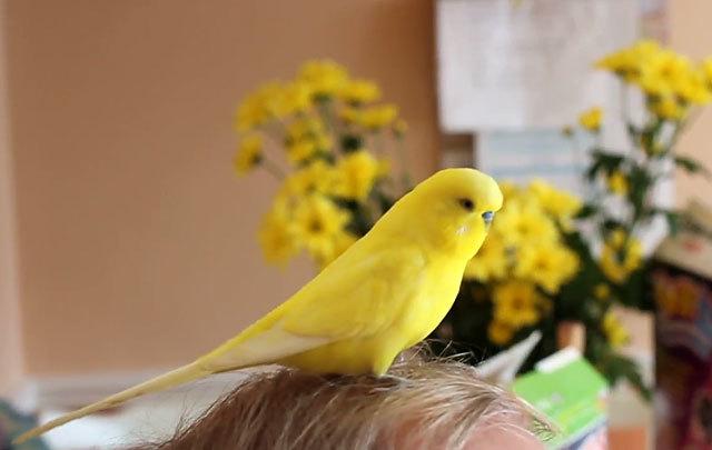 Может развиться аллергия на птиц, если жить с ними?