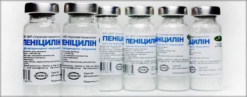 Анализ крови на сифилис: расшифровка результатов, показатель суммарных антител к t.pallidum